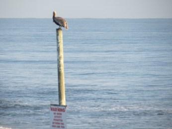 Warning sign perch