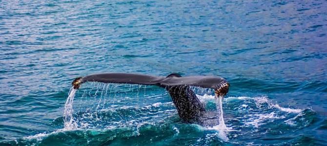 Hawaii's Extraordinary Wildlife Will Amaze You!