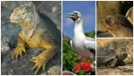 Tips for Your First Visit to the Galapagos Islands