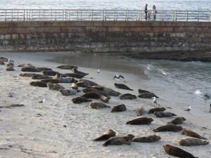 rediscover San Diego seals