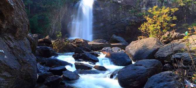 Wild Wayanad – 5 Things You Shouldn't Miss