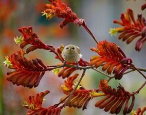 Queensland birds