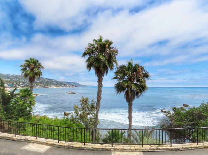 Palm trees near beach
