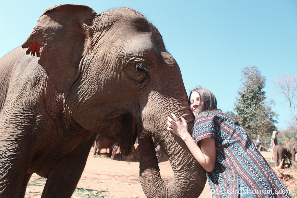 Dónde ver elefantes en Tailandia - Elephant Jungle Sanctuary Chiang Mai