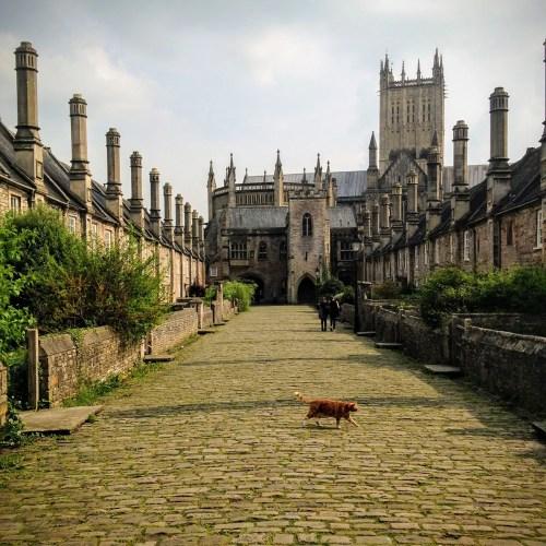 Cat in Wells, England
