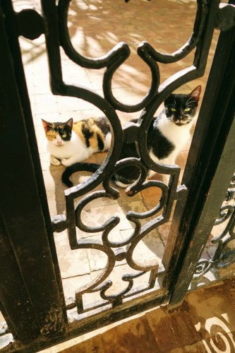Cats in Fez, Morocco