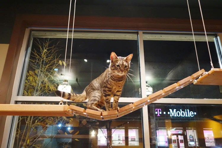 Seattle Meowtropolitan cat