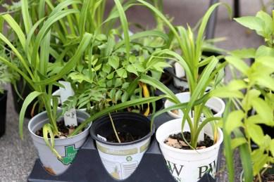 Farmer's-Mkt-Downtown-Herbs