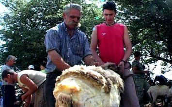 """To έθιμο του """"κούρου"""" στα Ακαρνανικά Όρη – Τα αιγοπρόβατα βγάζουν τα χειμωνιάτικά τους"""