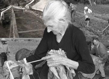 «Μάνα μου καπνοφύτισσα»: Ο ύμνος των καπνοκαλλιεργητών του Αγρινίου