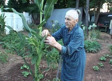 Η φάρμα της γιαγιάς Ελένης από την Ευρυτανία στο Charlotte