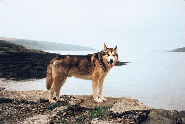λυκος 5