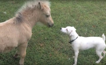 Animal life: Μία ιδιαίτερη φιλία γεννήθηκε