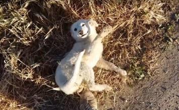 Ένα αδέσποτο κουτάβι που κλέβει καρδιές με τα παιχνίδια του
