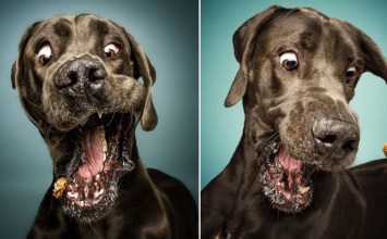 Πιάνοντας λιχουδιές στον αέρα – Αστείες φωτό λαίμαργων σκυλάκων