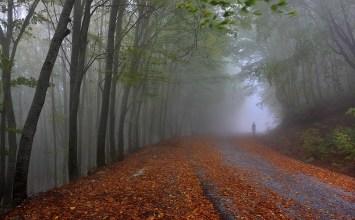 Παγγαιορείτικα κάστανα: η λευτεριά του δάσους και μια επικοινωνία με το θεό