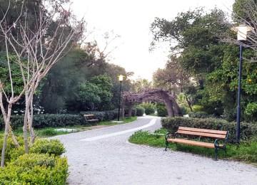Mαθαίνω περισσότερα για το Πεδίον του Άρεως: Δέντρα και θάμνοι