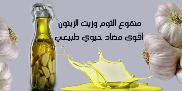 منقوع الثوم و زيت الزيتون اقوى مضاد حيوي طبيعي