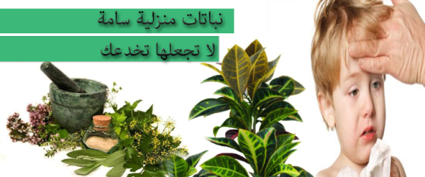 نباتات منزلية سامة لا تجعلها تخدعك