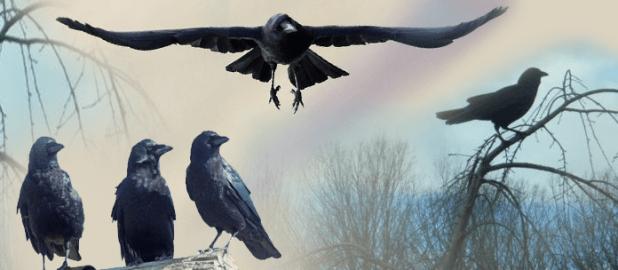 أذكى الطيور على وجه الأرض