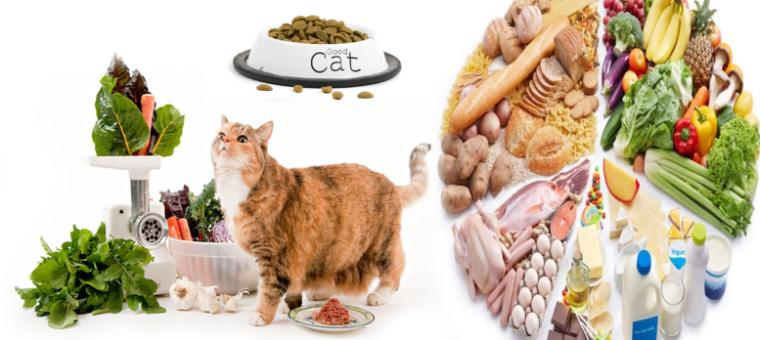 طعام القطط