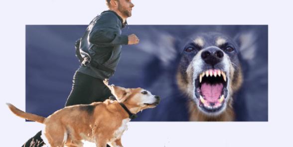 تدريب الكلاب بطريقة سهلة