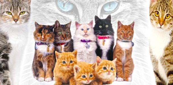 أيهما أفضل تربية القط الذكر أم الأنثى