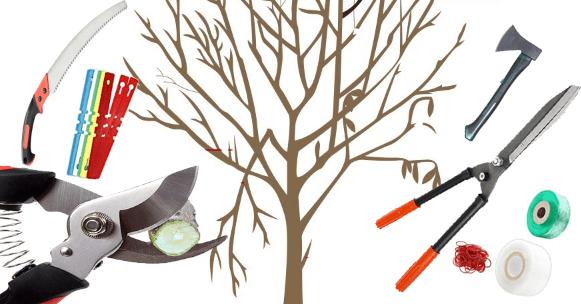 تقليم الأشجار المثمرة