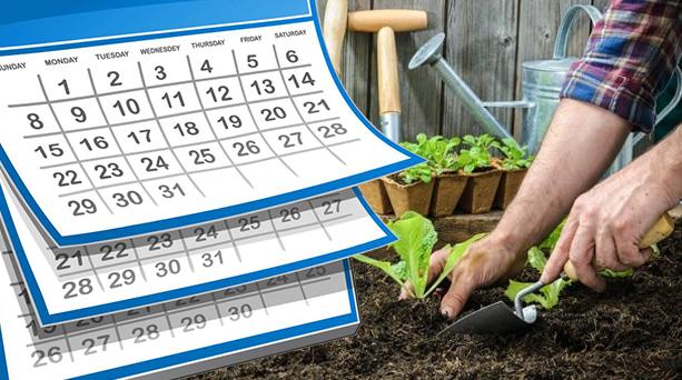 مواعيد زراعة الخضروات في ألمانيا