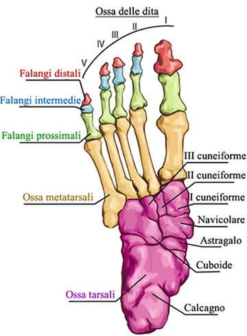 Piede e Postura 1