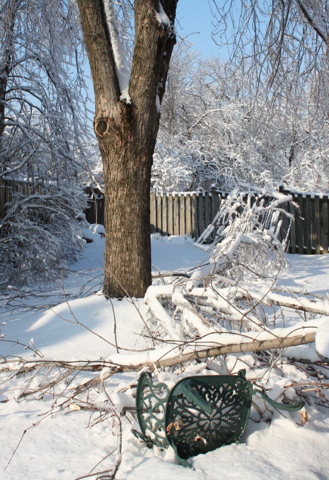 Our back garden in shambles after the ice storm