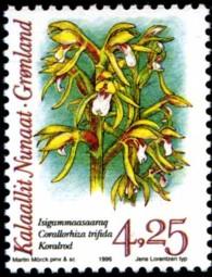 orchidee-425-kr-877-195p.jpg