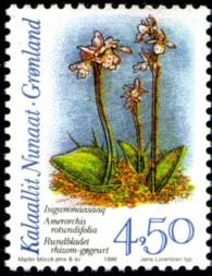 orchidee-450-kr-878-195p.jpg