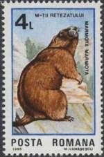 4postzegel-marmota-marmota-alpenmarmot-murmeltier-roemenie-1985-postzegelblog