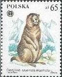 5-postzegel-marmota-marmota-alpenmarmot-murmeltier-polen-1984-postzegelblog