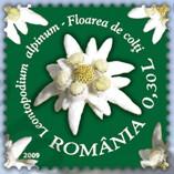 flora_roemenie_2009_poststamp_edelweiss