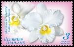 thailand_bloem_orchidee_150pix