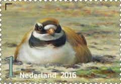Griend-vogels-van-het-wad-bontbekplevier