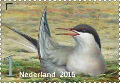 Griend-vogels-van-het-wad-visdief