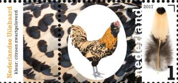 nederlandse-kippenrassen-nederlandse-uilebaard