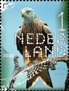 Beleef de natuur - roofvogels en uilen - rode wouw