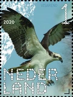 Beleef de natuur - roofvogels en uilen - visarend