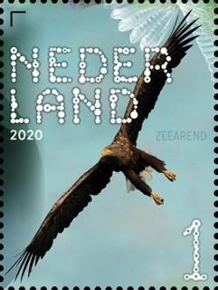 Beleef de natuur - roofvogels en uilen - zeearend