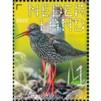 Beleef de natuur - boerenlandvogels tureluur
