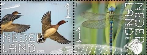 Beleef de natuur - De Onlanden - smient en groene glazenmaker