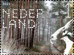Beleef de natuur - Dwingelderveld - grove den