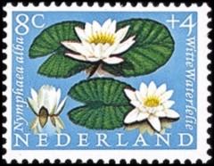 NVPH 740 - Zomerzegel 1960 - waterlelie