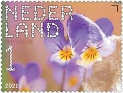 Beleef de Natuur - Duin en Kruidberg - duinviooltje