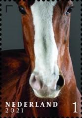 Nederlandse paardenrassen [8] - Hobyant