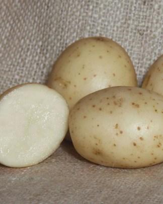 Bambino Seed Potatoes